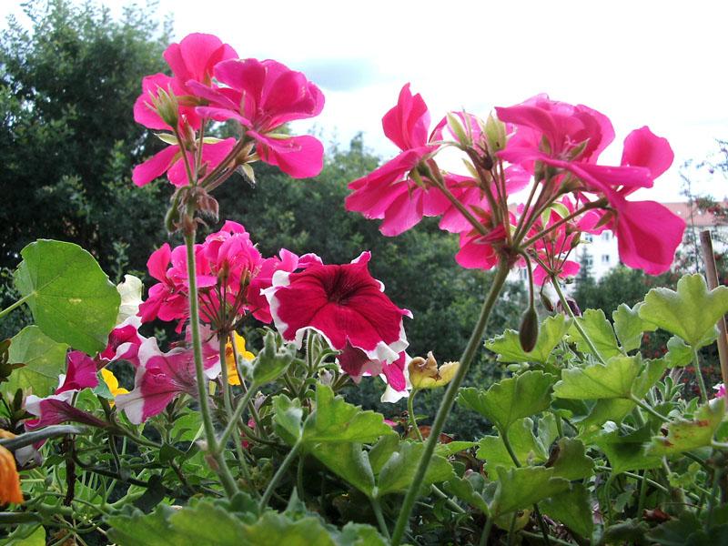 Blumen in kästen und kübeln anpflanzen