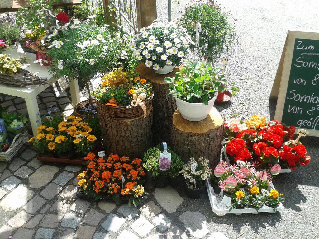 Pflanzen für Garten und Balkon